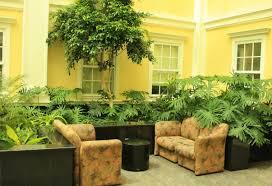 best indoor trees plant large indoor plants wonderful big leaf indoor plants giant