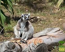 fort wayne kid u0027s zoo fwkidszoo twitter
