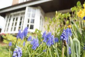natural ways to keep bugs away from your yard the allstate blog