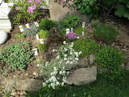 rock garden plants for sale 15 best garden design ideas