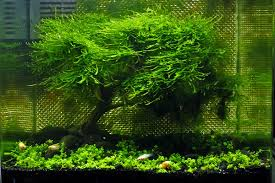 Aquascaping Plants Starting A Planted Aquarium Tank And Garden Planted Space