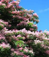 fast growing trees and plants for sale patioplants