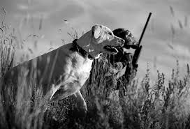 Hunting dogs need conditioning care Outdoors