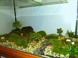 i scored a free fish tank so i made a massive terrarium with a