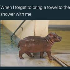 Baby Hippo Meme - 15 best hilarious hippo memes images on pinterest hilarious