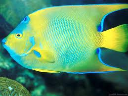 balıklar hakkında haberler