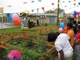 Urban Garden Houston Texas Department Of Agriculture Houston U0027s Community Garden
