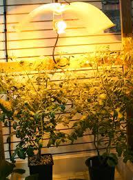 where to buy indoor grow lights growing vegetables indoors the gateway gardener