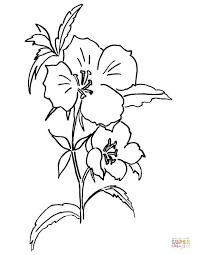 godetia rubicunda u0027farewell spring u0027 coloring free