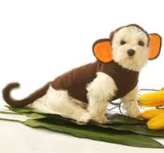 Halloween Costumes Monkey 59 Dog Halloween Costumes Images Dog Halloween