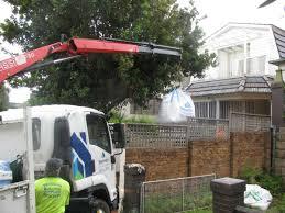 ray nesci bonsai nursery home landscape supplies in dural nsw 2158 australia whereis