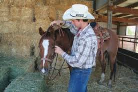 team roping success increase your horse u0027s performance expert