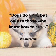 quotes about family judging dog quotes the ultimate list american kennel club