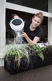 diy window flower boxes 42 best window boxes images on pinterest window boxes planter
