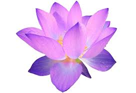 purple flower purple flower transparent png stickpng