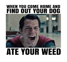 Funny Memes About Weed - superman s dog ate his weed funny marijuana humor memes