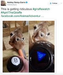 Meme Giraffe - giraffe cam memes hilarious internet can t wait to see baby giraffe