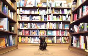 Barnes And Nobles Jacksonville Dog Friendly Retail Chains 12 Stores That Allow You To Shop With