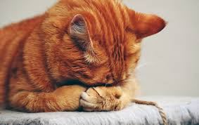 qui pisse sur le canapé éviter les pipi de chats trucs et astuces maison