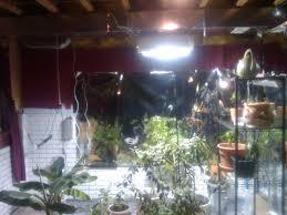 indoor green house u2013 haughtypenguin blog