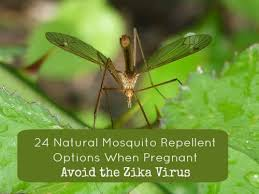 natural mosquito repellents 24 tips natural mosquito repellent during pregnancy avoid zika