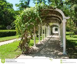 photos de pergola pergola in botanical garden in rio de janeiro stock images image