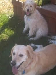 Dogs In The Bathtub Mueller U0027s Woodville Kennels