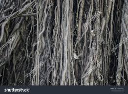 big tree root jungle wild amazing stock photo 478060666 shutterstock