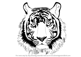 learn how to draw a tiger big cats by drawing