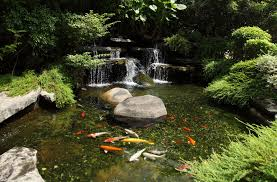 how to protect japanese pond fish house exterior and interior