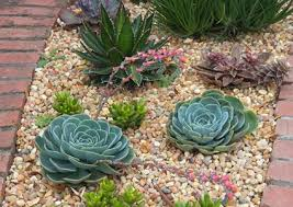 Succulent Gardens Ideas Landscaping Garden Design With Succulents Lovetoknow