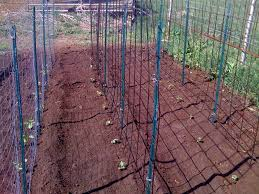 vertical gardening cranberry compost u0026 gardening blog