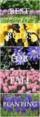 25 best spring flowering bulbs ideas on pinterest planting