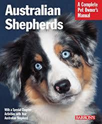 movies with australian shepherds australian shepherd dog training think like a dog but don u0027t eat