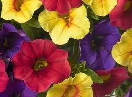 Hilo Flowers - confetti gardens