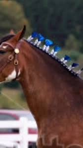 hairstyles for horses 679 best horse hairstyles images on pinterest beautiful horses