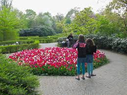 10 ways to visit tulip gardens in bloom in holland