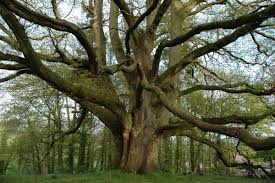 the meaning and symbolism of the word tree