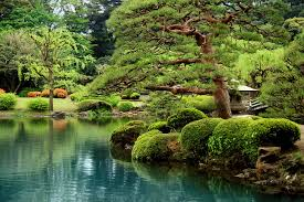 calm zen lake and bonsai trees in tokyo garden wall mural