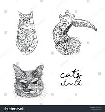 cat illustration drawing sketching by hand stock illustration