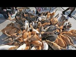 cat island japan s cat island incredible youtube