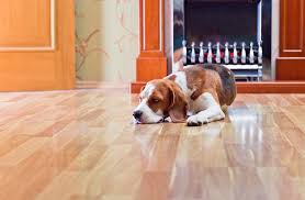 how to deal with pet urine and pet spills on your hardwood floor