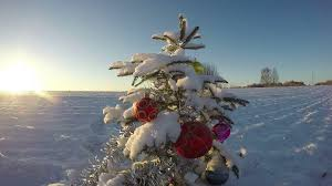 beautiful decorated snowy new year christmas tree on farm field