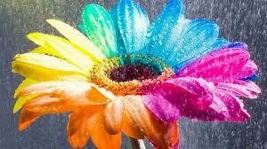 image of flowers qygjxz