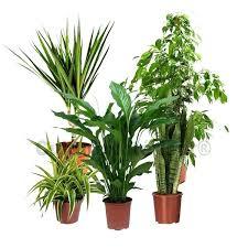 plantes d駱olluantes chambre plante interieur depolluante pack 5 plantes dacpolluantes