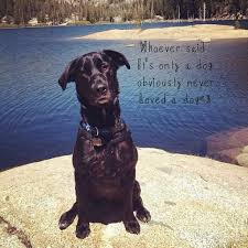 Black Lab Meme - funny for funny black lab quotes www funnyton com