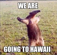 Hawaii Memes - meme creator we are going to hawaii meme generator at memecreator org