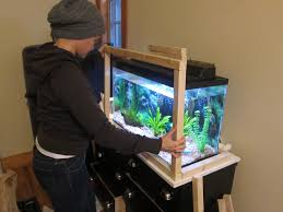 thought you would like to see my fish tank marvellous fish tank