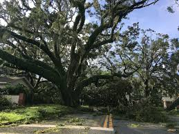 polk wakes up to hurricane irma damage begins cleanup news