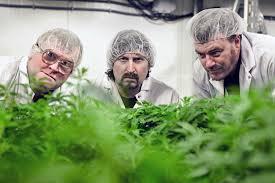 Bad Boys 3 Trailer Pesticide Scandal Snares U0027trailer Park Boys U0027 Approved Marijuana